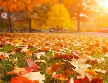 Um samba para o Outono